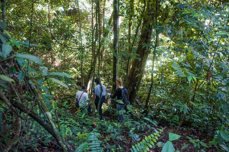 bukit lawang wandeling sumatra