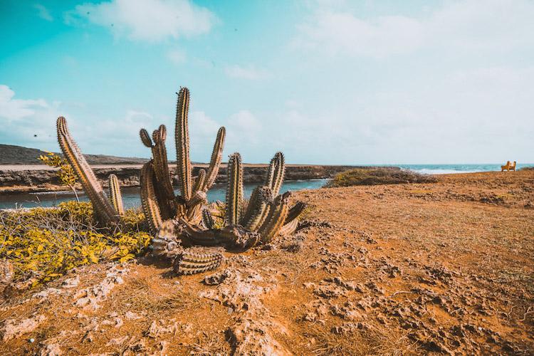 cactussen curacao-somsookheimwee-78