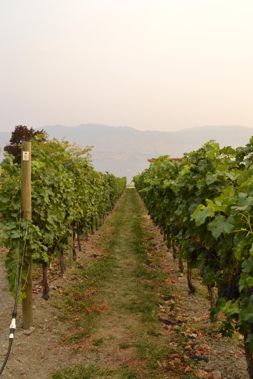 canada kelowna winery