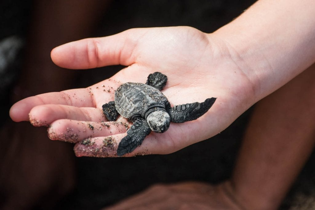 canggu bali schildpadden uitzetten_-2