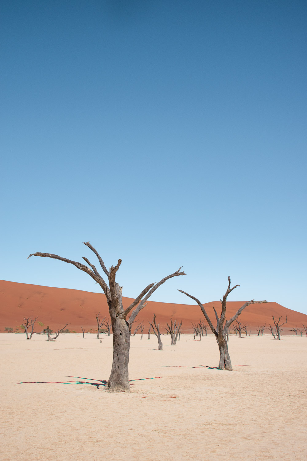 deadvlei in namibie