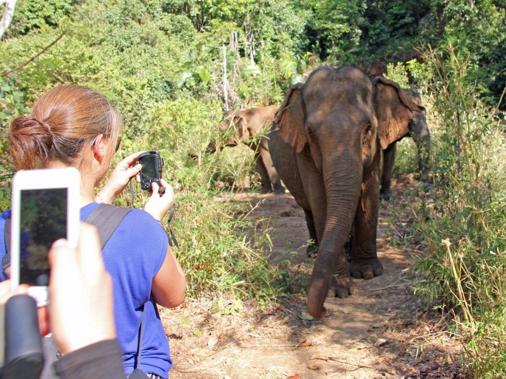 dieren excursies op reis Elephant Valley Project