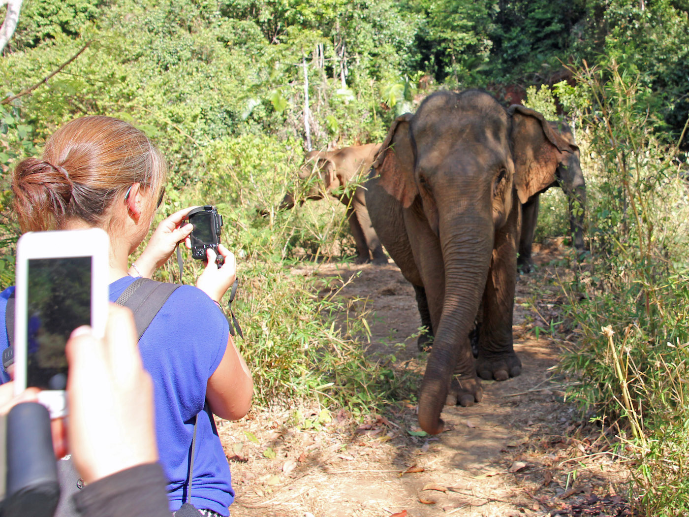 dieren excursies op reis Elephant Valley Project