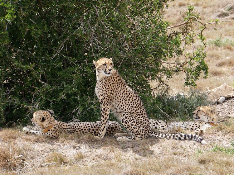 dieren excursies wat je niet moet doen