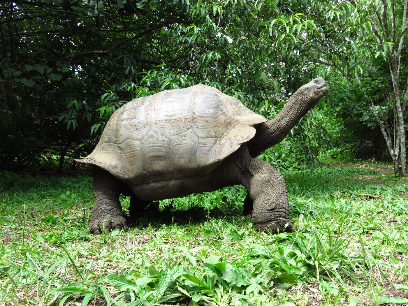 dieren galapagos schildpad