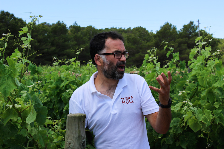 doen op formentera wijngaarden