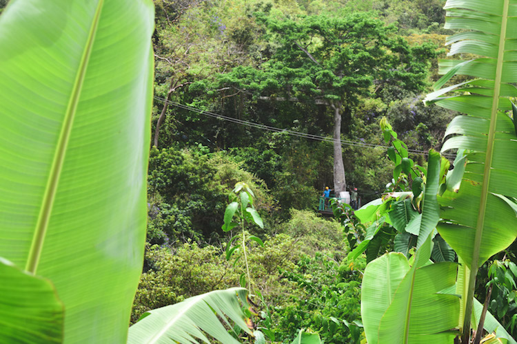 eiland antigua ziplinen jungle-2
