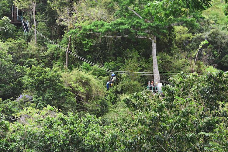 eiland antigua ziplinen jungle
