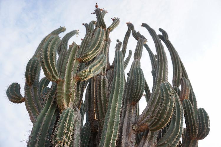 eindeloze cactussen tatacoa woestijn