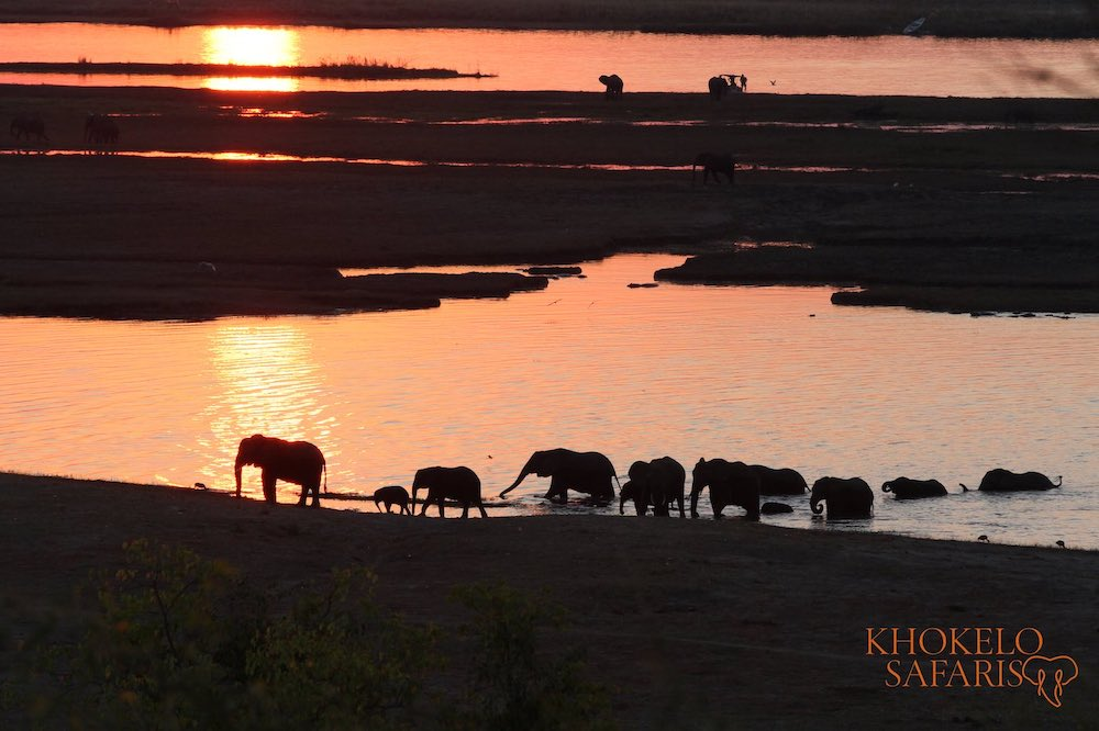 Olifanten steken een rivier over in Chobe