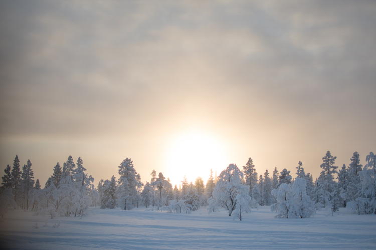 excursies Lapland winterlandschap