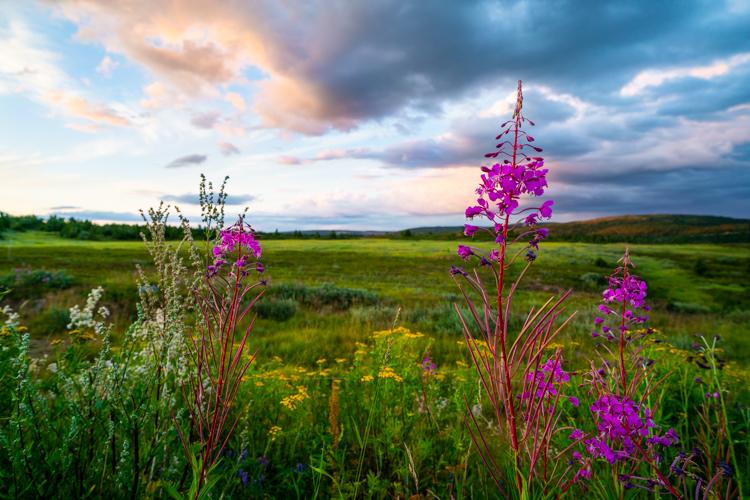 goedkoop-naar-noorwegen-bloemen