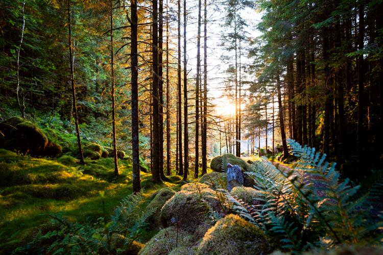 goedkoop-noorwegen-wandelen-donker-bos