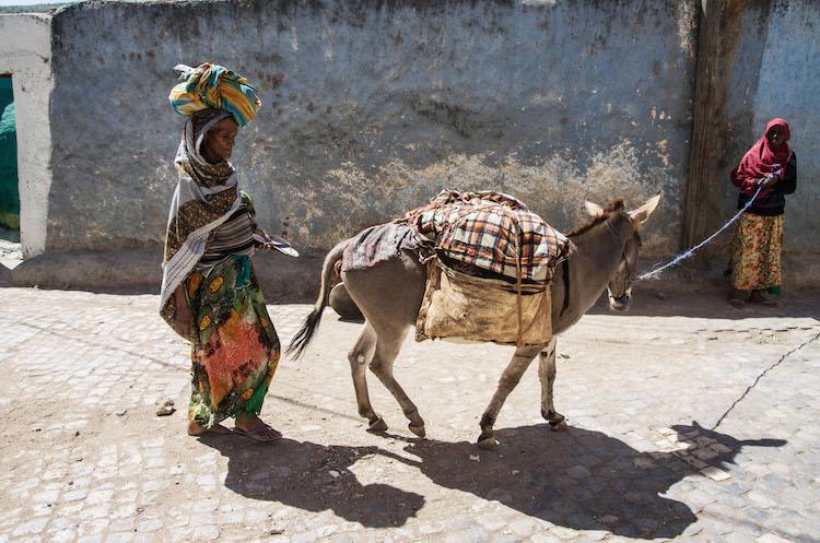 harar reizen ethiopie reis