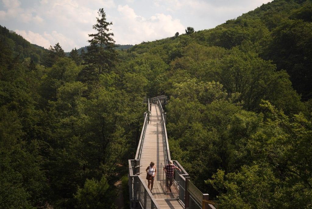 harz gebergte hoogte bos -33
