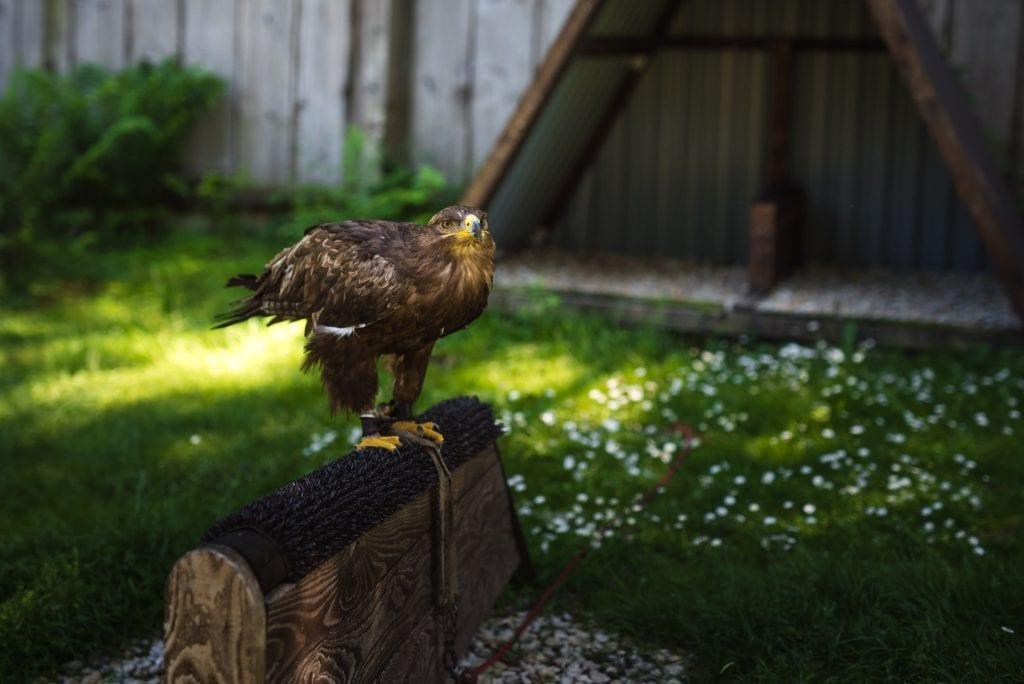 harz gebergte vogels duitsland-15