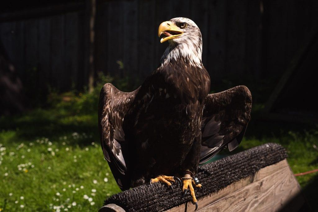 harzgebergte vogels-19