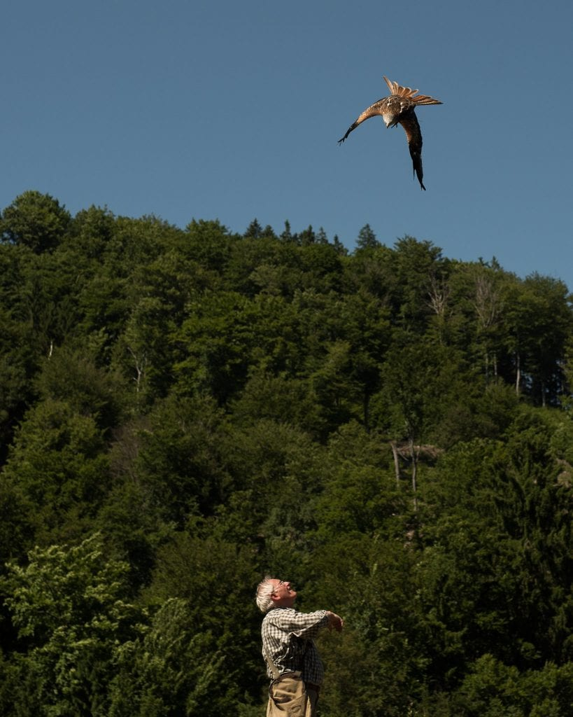 harzgebergte vogels spotten-17