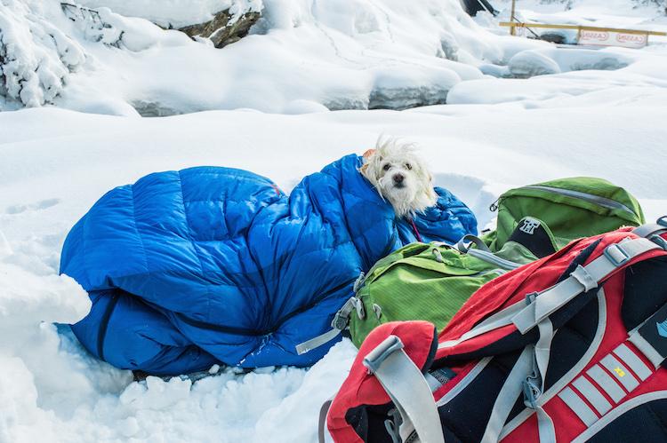hond ijsklimmen oostenrijk in Eispark tirol