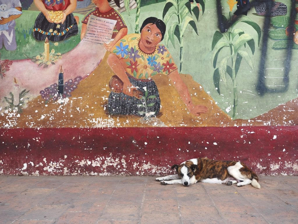 hond markt guatemala Chichicastenango