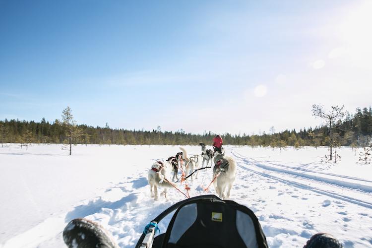 huskytocht lapland sneeuw finland