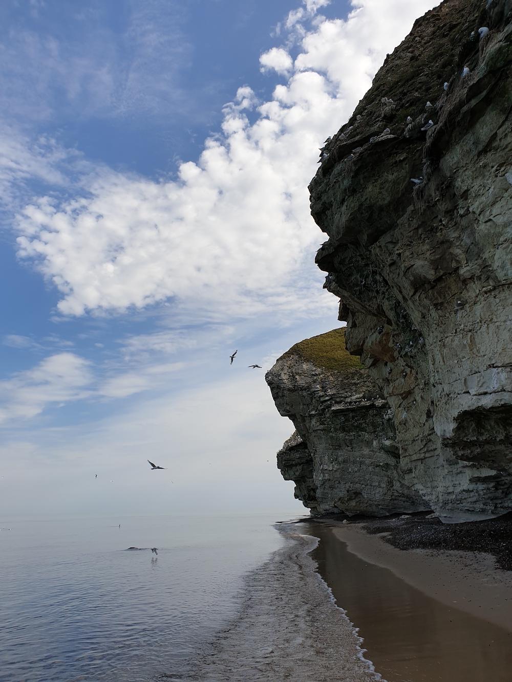 kalkstenen rots Bulbjerg in Denemarken