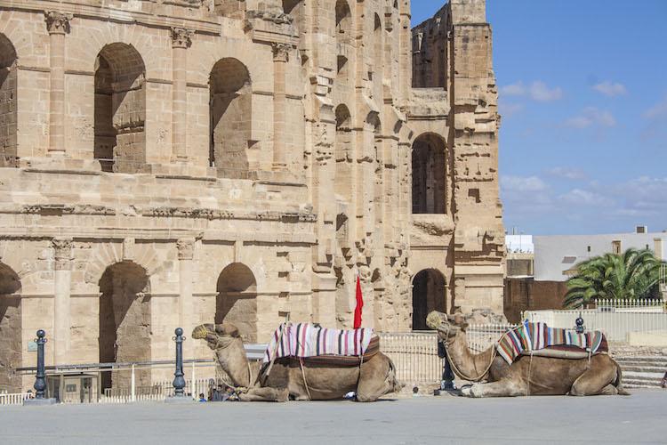 kamelen in tunesie