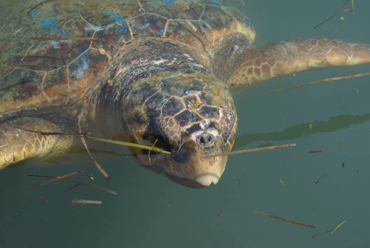 kefalonia-schildpadden-griekenland