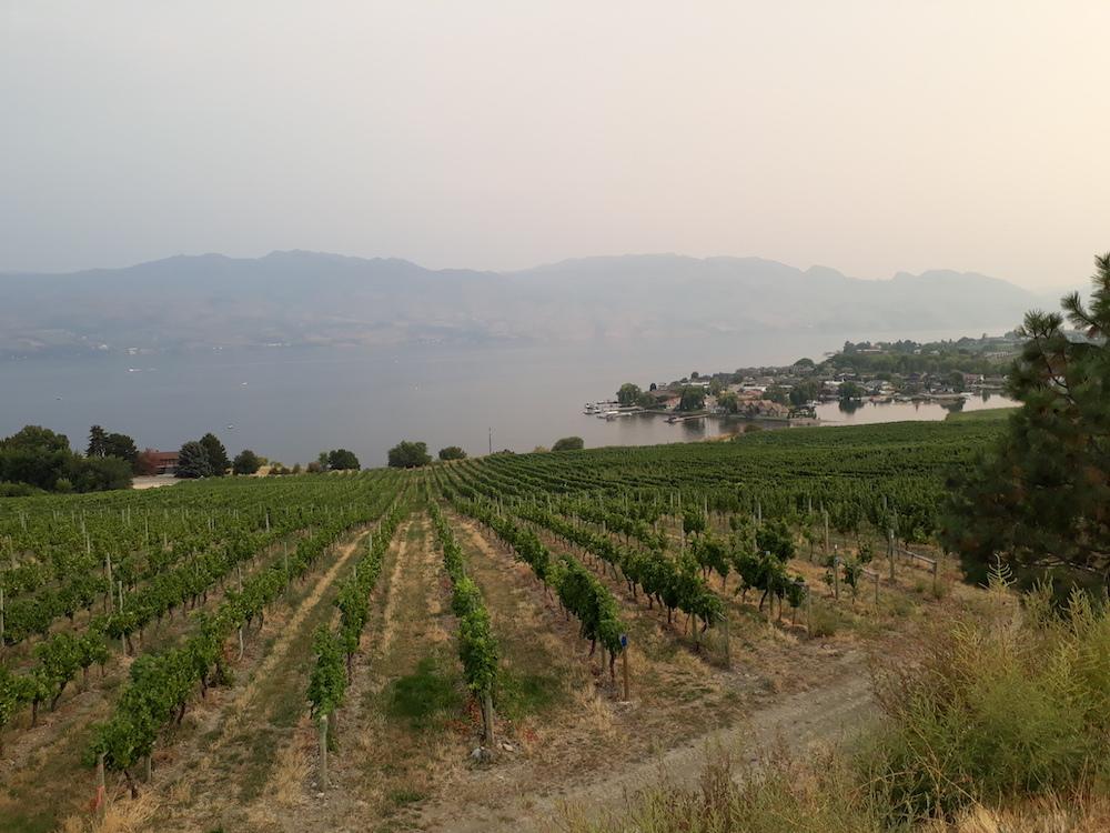 kelowna canada wijngaarden