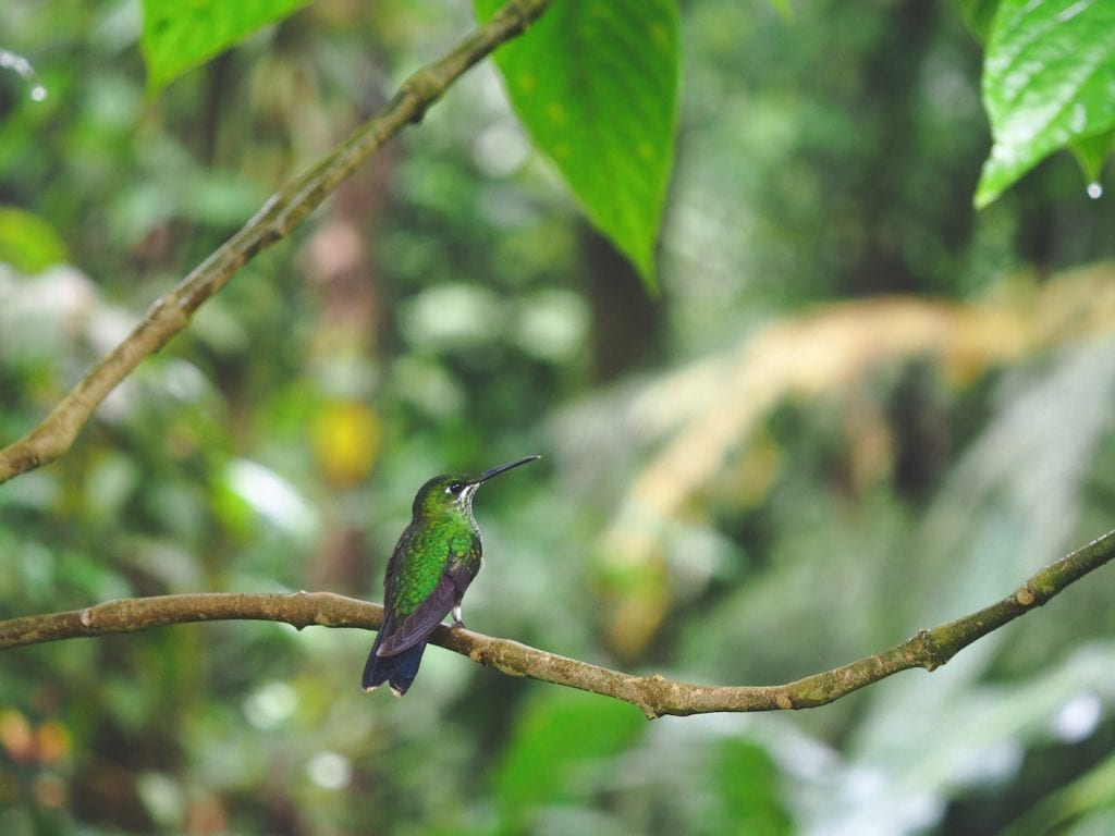 kolibrie costa rica waterval
