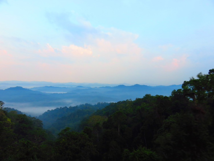 laos Gibbon Experience bergen