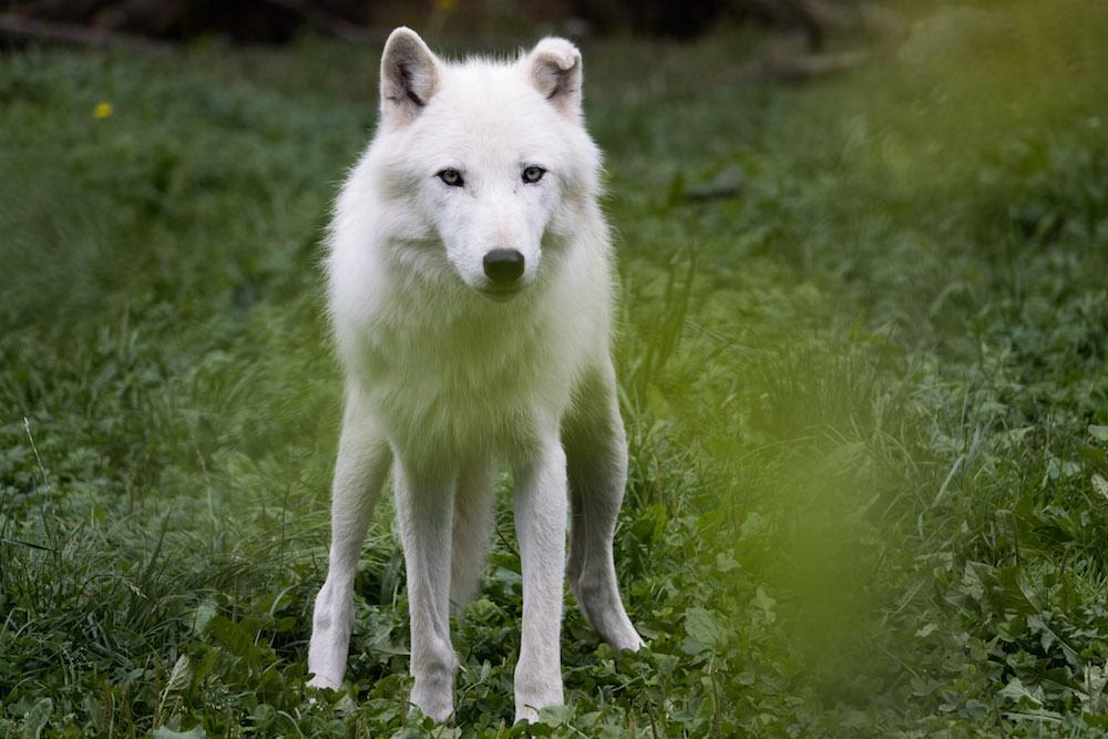 lorraine lunchen witte wolven 26