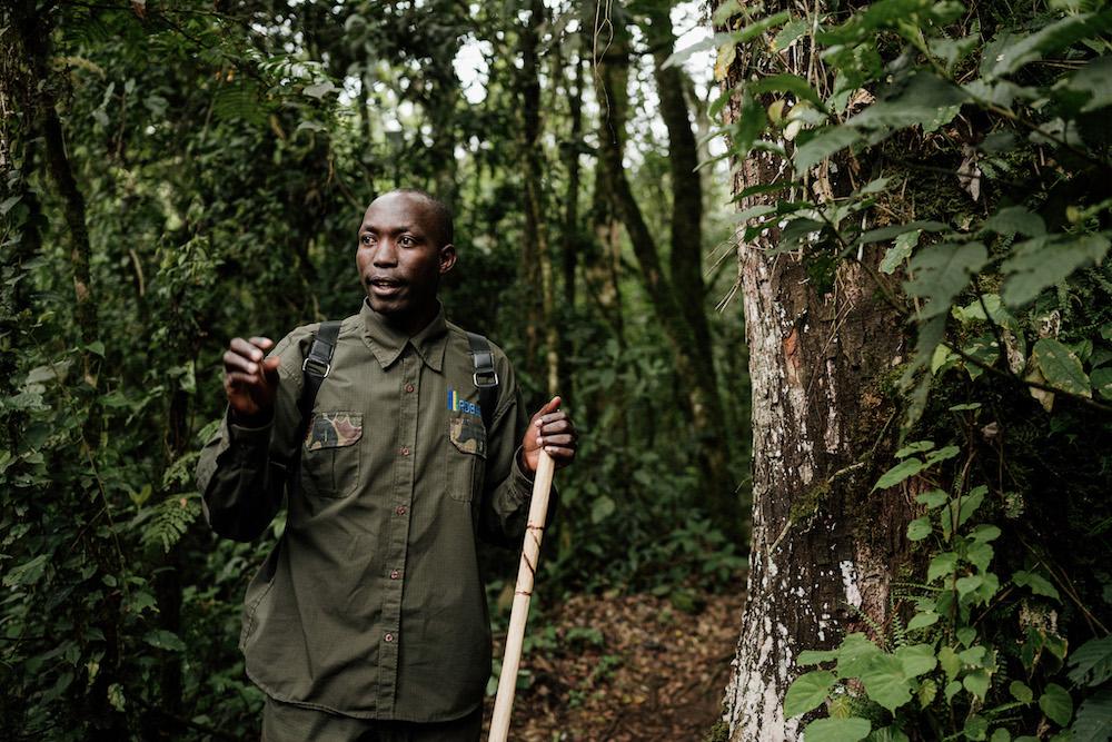 met gids jungle in tijdens rwanda reizen
