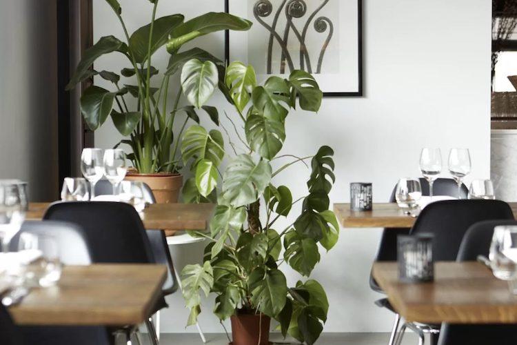 mooirivier restaurant hotel