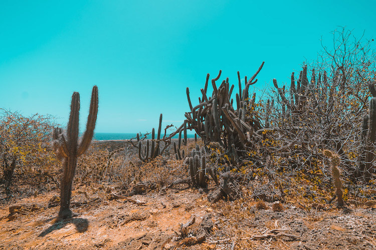 mooiste pekken curacao somsookheimwee cactus