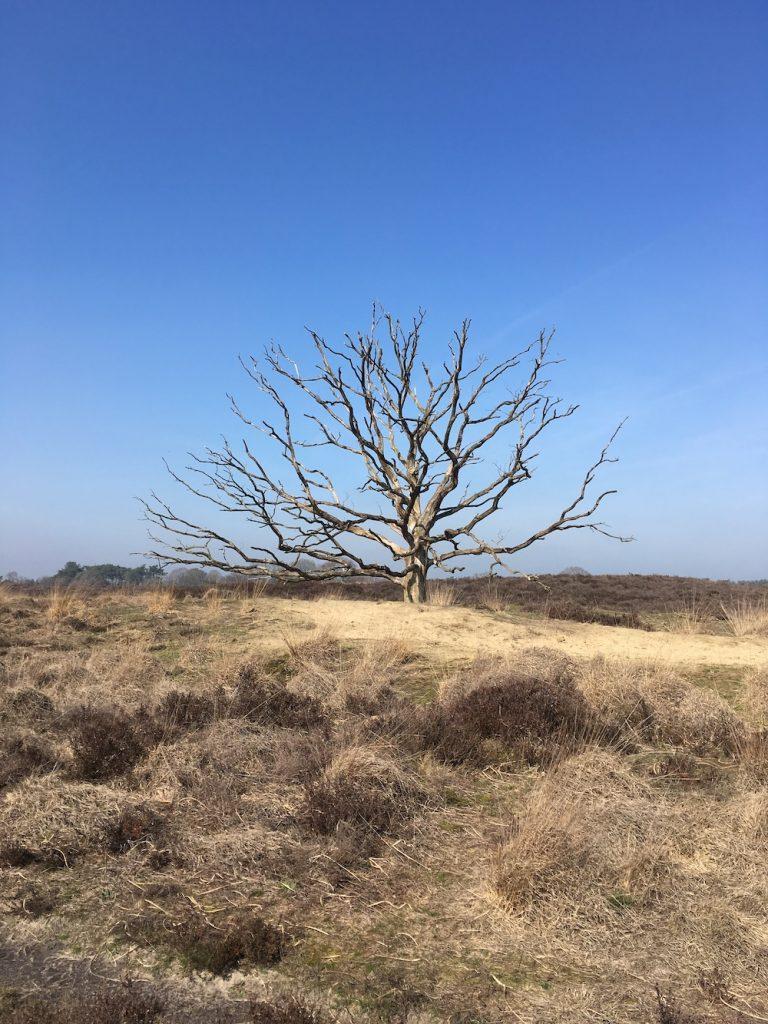mooiste plekken nederland Oisterwijkse Bossen