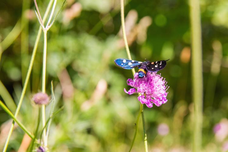 natuur in Monte Cucco umbrie
