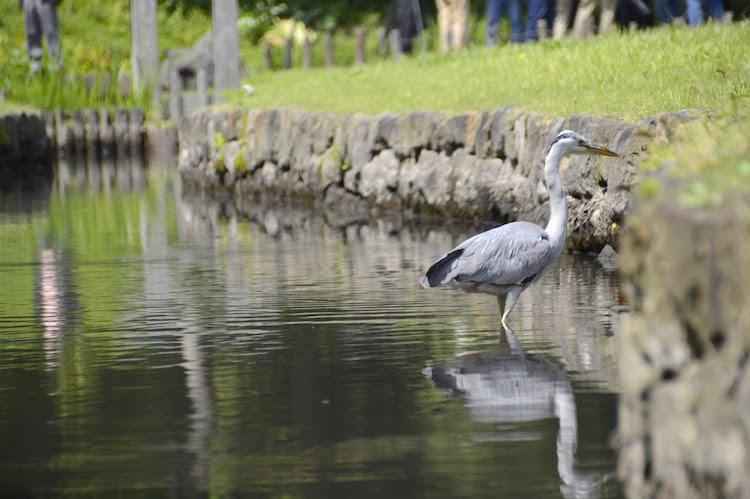 natuur in tokyo vogels