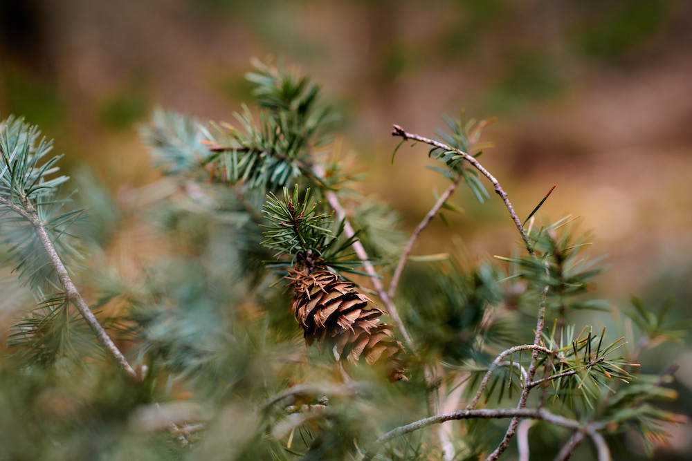 natuurfotografie workshop in het bos
