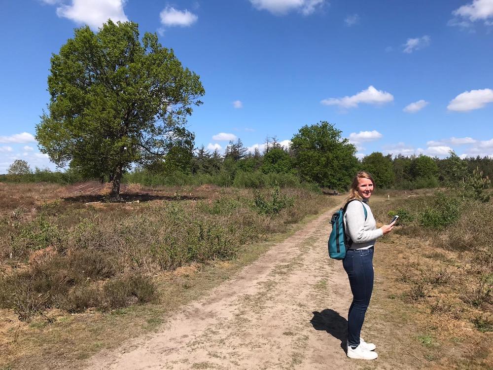 natuurgebied de Maashorst brabant