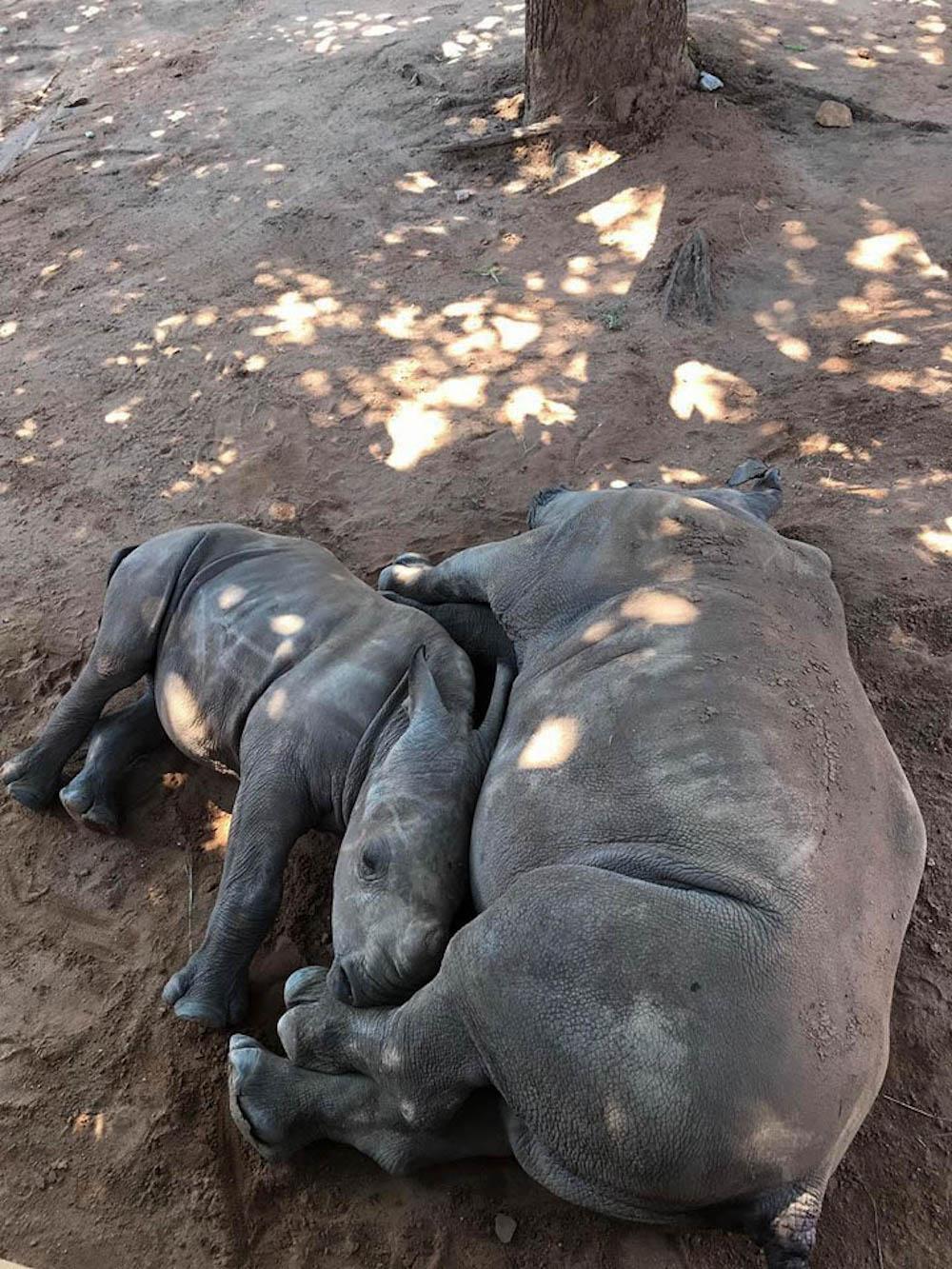 neushoorn zuid afrika