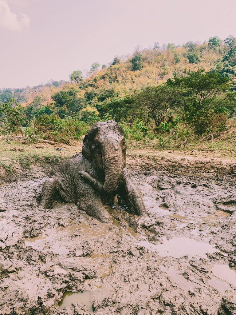 noord thailand olifant