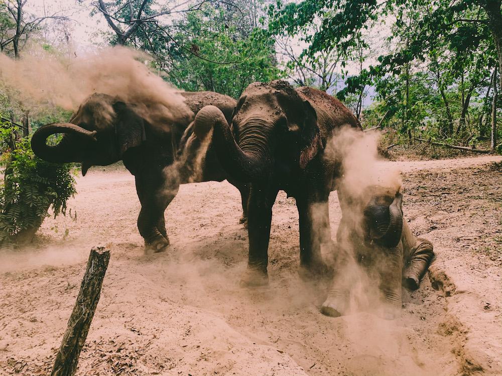 noord thailand olifanten