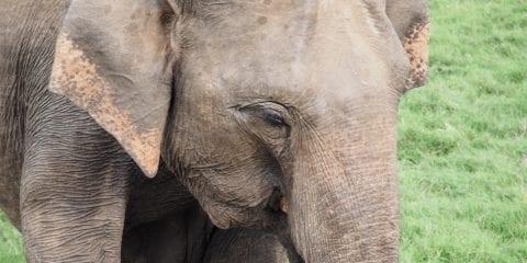 olifant reizen close up