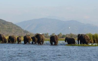 olifanten in liwonde malawi highlights