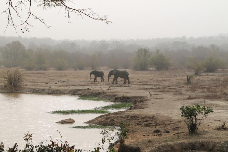 olifanten tijdens Ghana rondreis