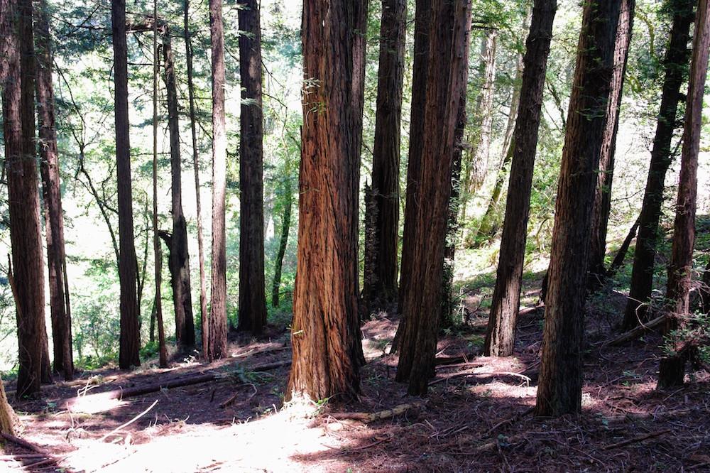 omgeving san francisco Dipsea Trail - Muir Woods