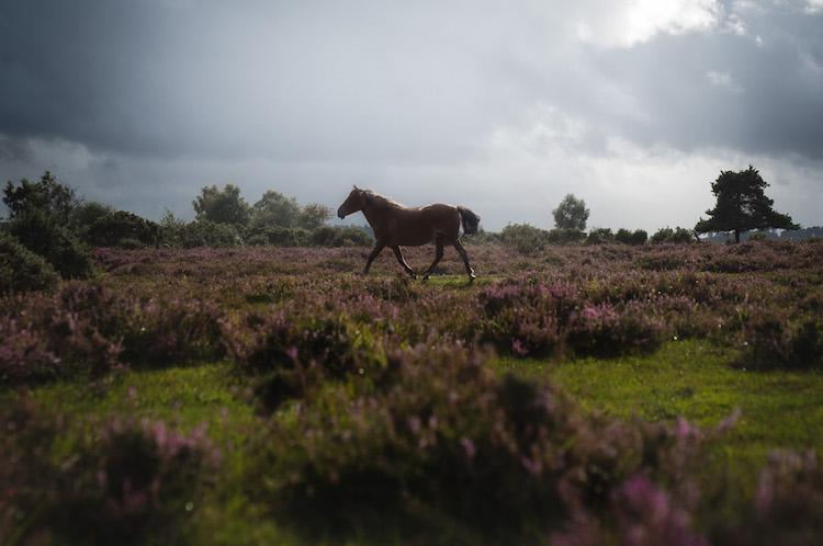 paarden engelse zuidkust