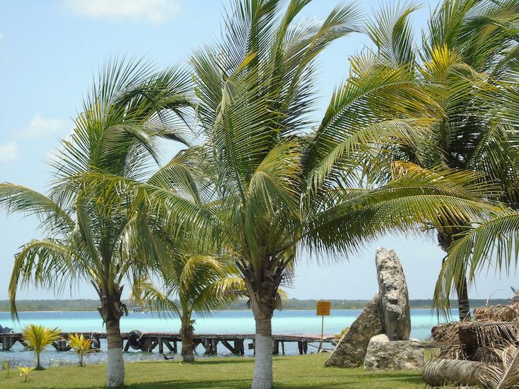 palmbomen Laguna Bacalar Mexico