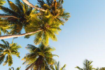 palmbomen eilandhoppen malediven